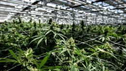 TSX REVIEWING CANNTRUST LISTING DUE TO FAILURE TO FILE FINANCIAL STATEMENTS