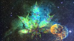 Cannabis going to the International Space Station - SpaceX
