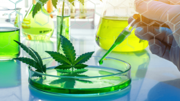 Fighting cancer with cannabinoids