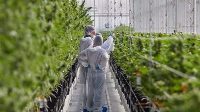 Aurora latest cannabis company to ice Latin American ambitions