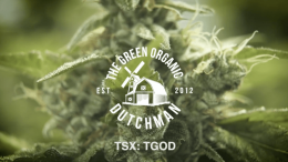 The Green Organic Dutchman: Q4 and Year End 2019 Financial Results