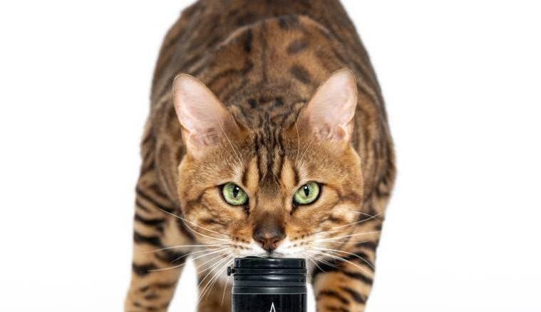 cbd oil for kittens