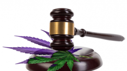 Health-Canada-to-publish-guidance-document-on-revoking-personal-medical-cannabis-production-licenses-