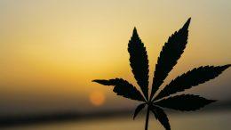 The-Power-of-Healing-Herb-An-Honest-Look-at-the-Benefits-of-Marijuana-Maintenance