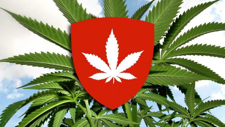Cannabis-situation-in-Switzerland