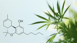 Expert-Cannabis-Crossword-Alert-Delta-8-THC