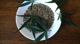 Do-Male-Cannabis-Plants-Produce-Female-Seeds-11