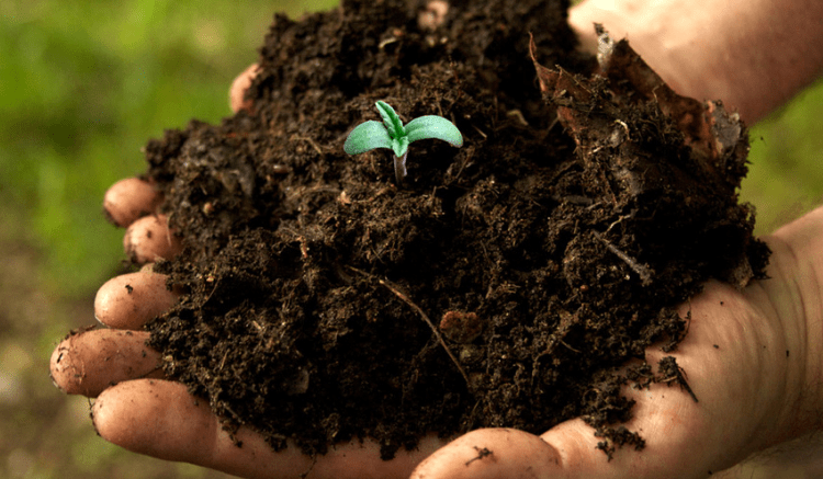 Best-soil-for-outdoor-cannabis-How-to-make-a-pathway-soil-bank-1