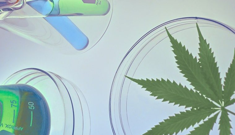 Is-HHC-1000-Stronger-Than-THC-and-Should-It-Go-To-Market