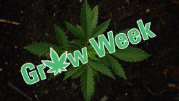 growweek-1